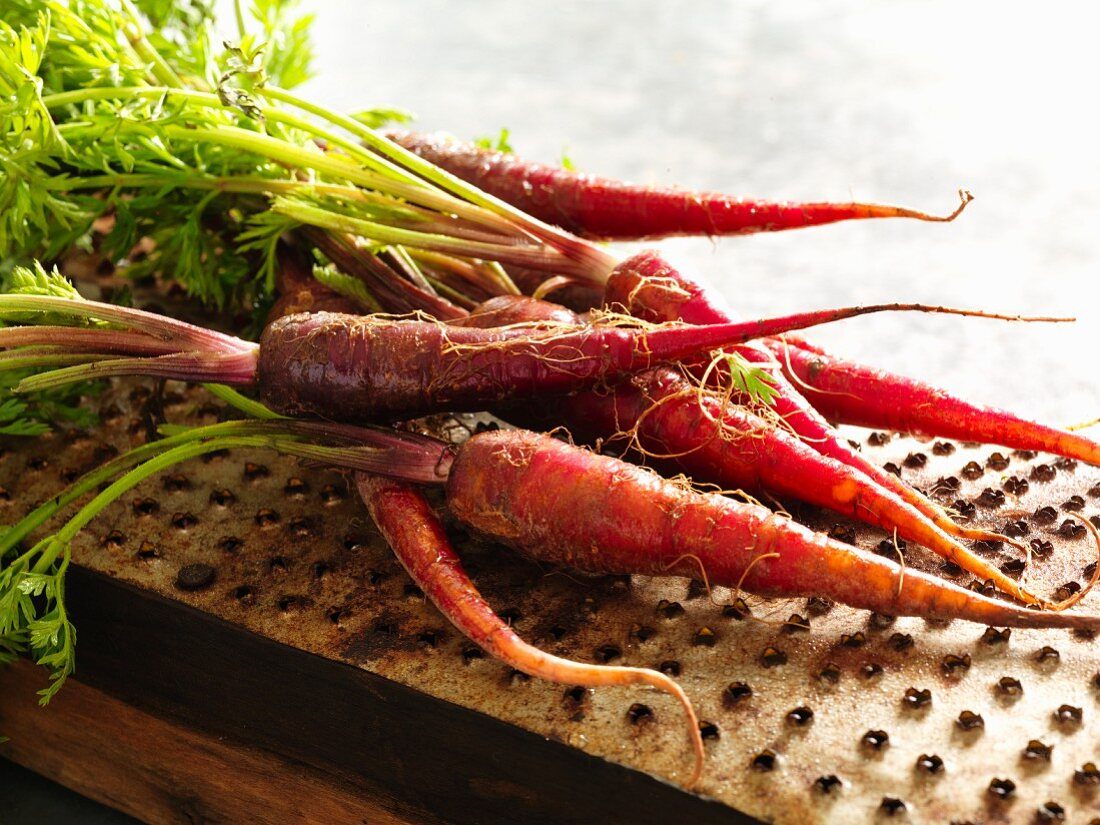 Freshly harvested red carrots with leaves