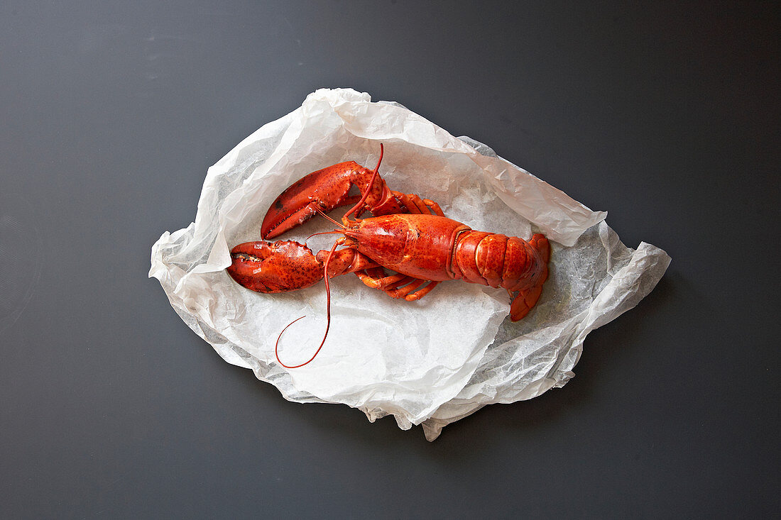 A whole cooked lobster on wihte paper