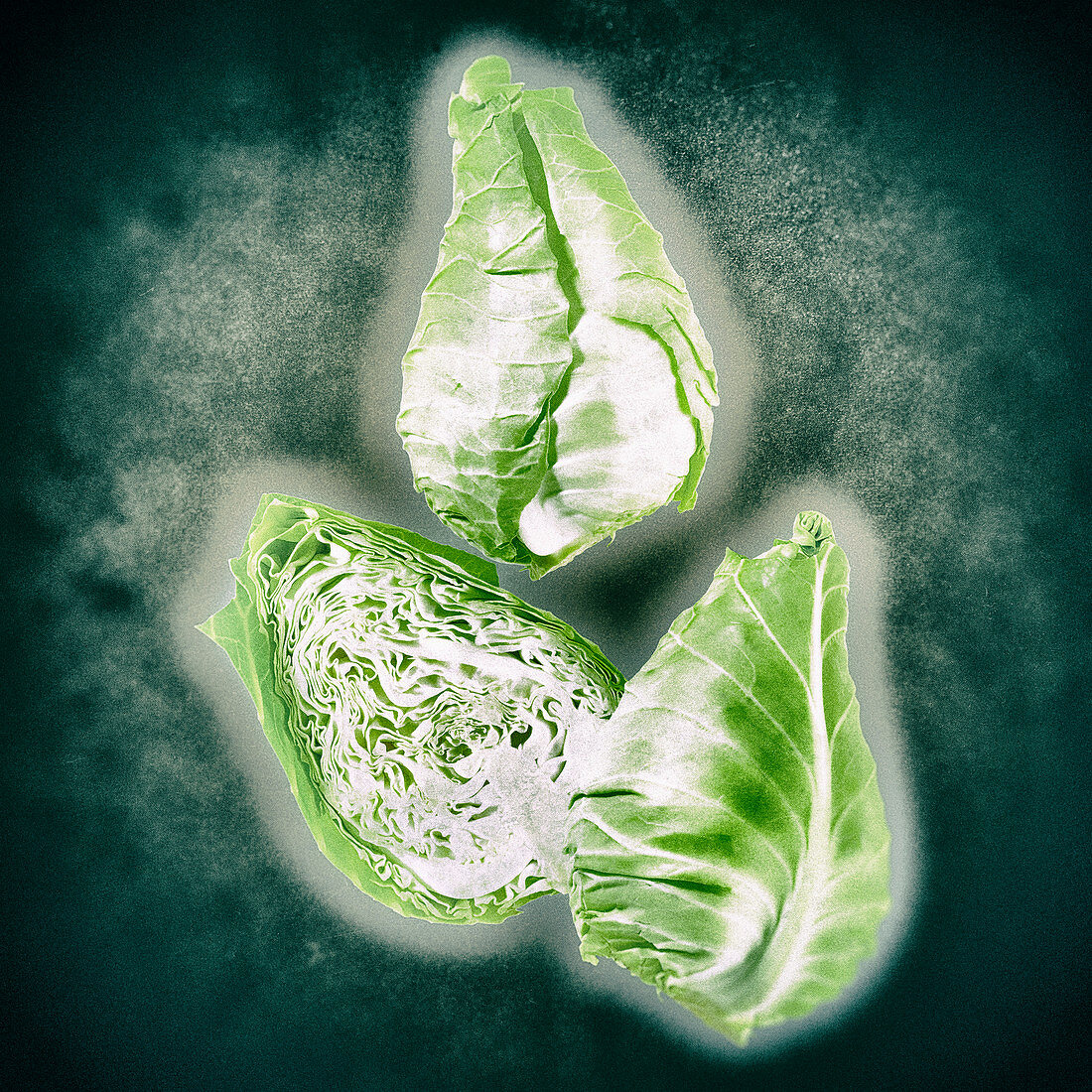 Pointed cabbage on a green background