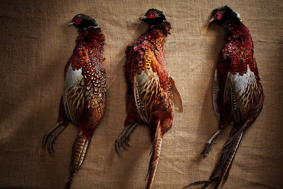 Three unplucked pheasants on a linen cloth