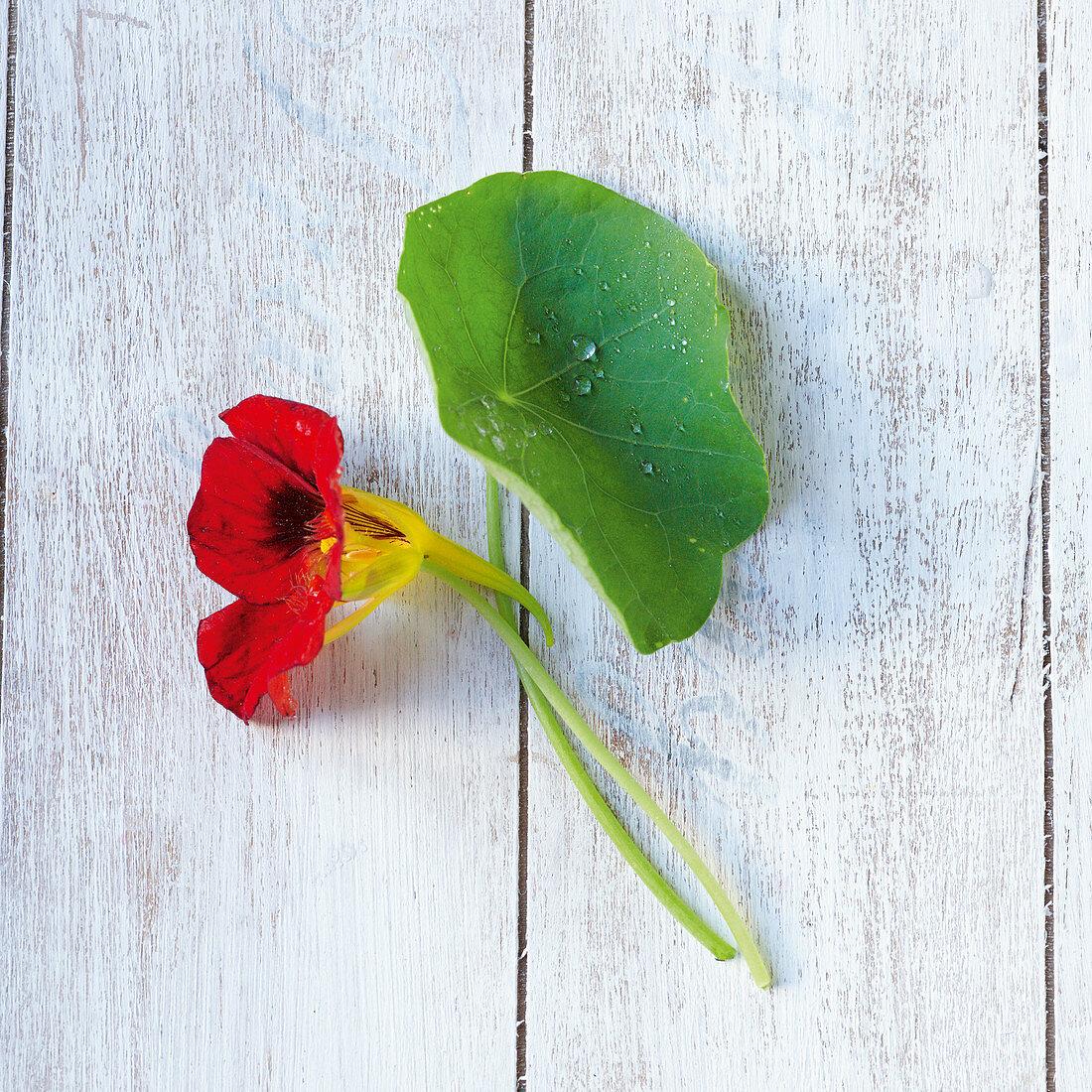 Kapuzinerkresse mit Blüten