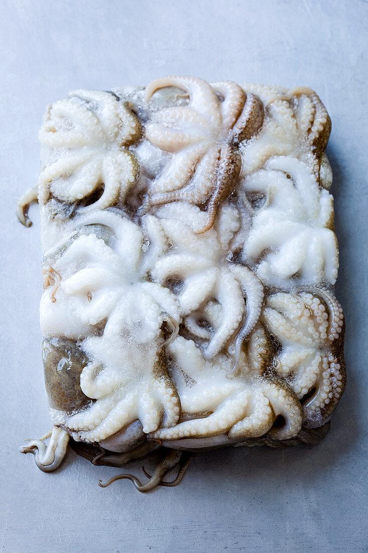 Frozen octopus defrosting on a sheet pan