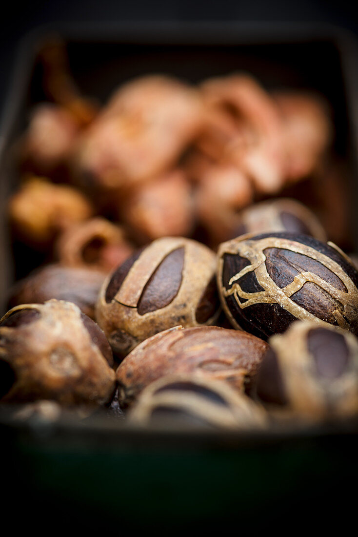 Macis and nutmeg with mace (close up)