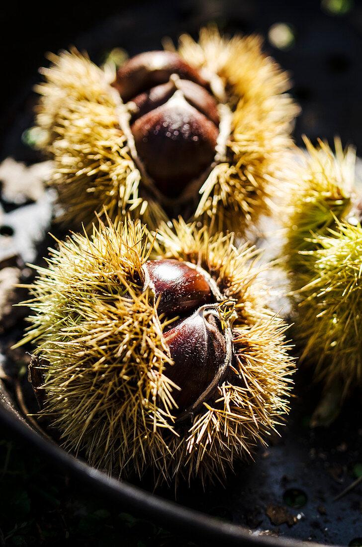 Chesnuts in a copper skillet