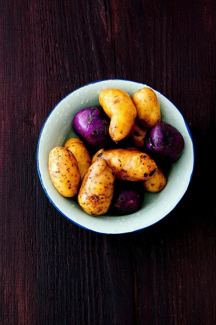 A selection of potatoes – Linda, Blue Congo and Vitelotte