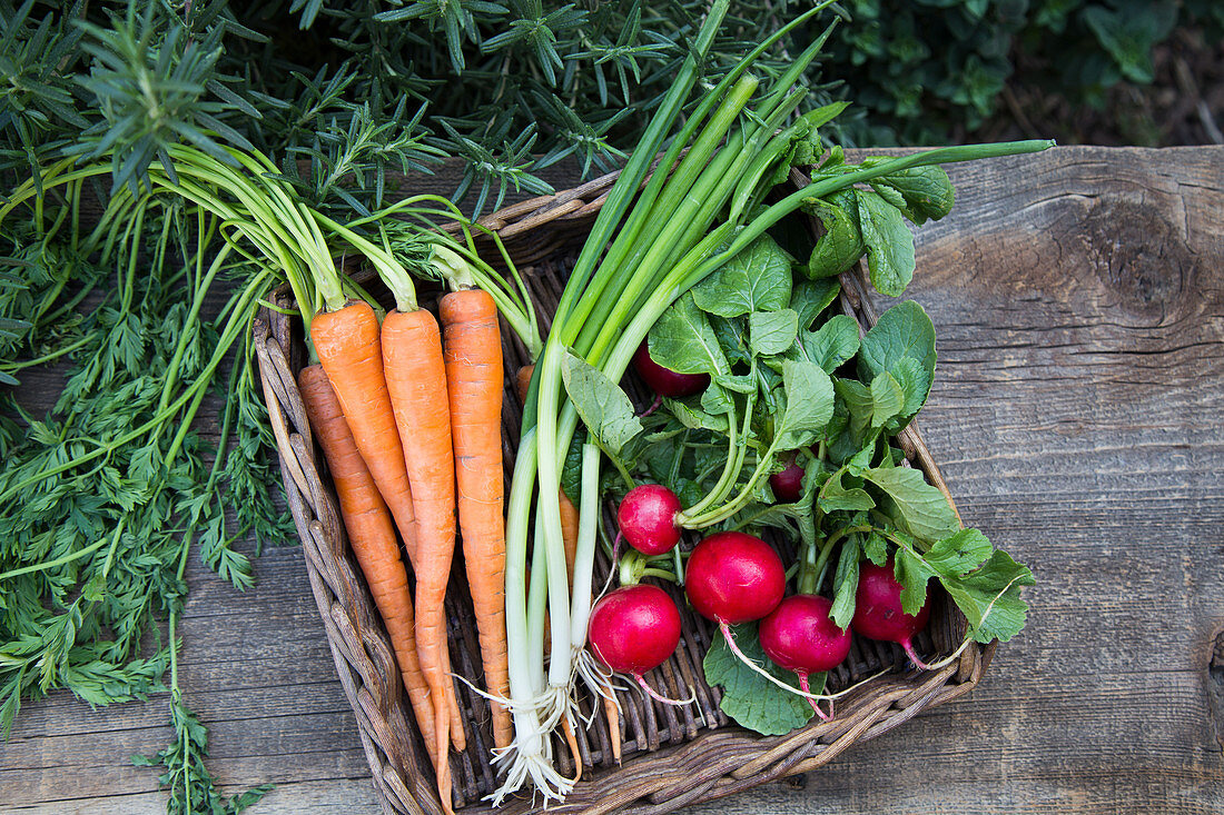 Spring Vegetables in Basket on Wood Surface