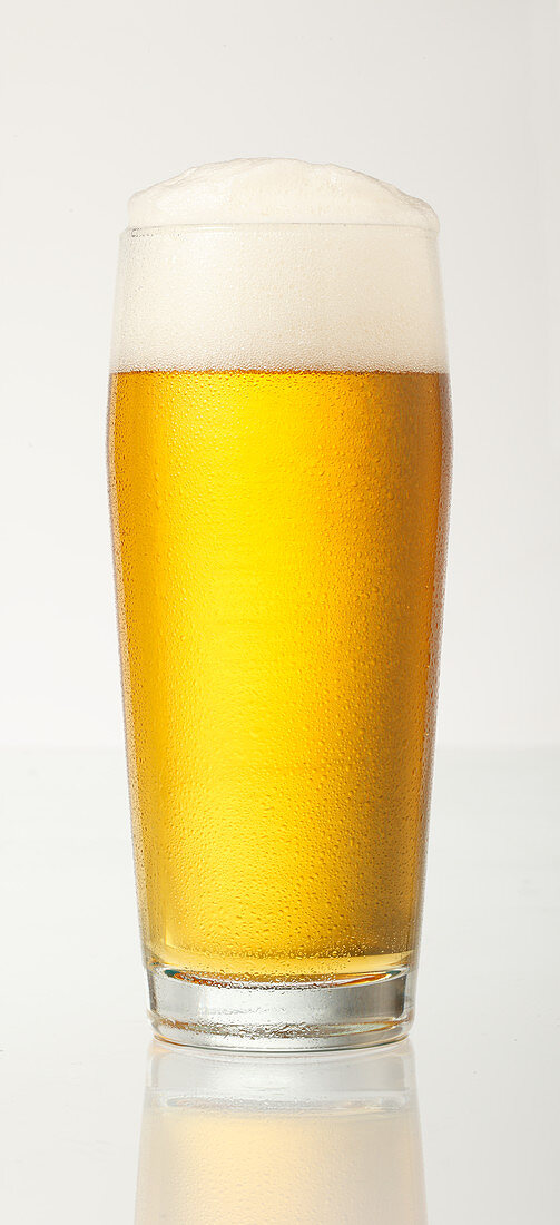 A glass of beer against a white background