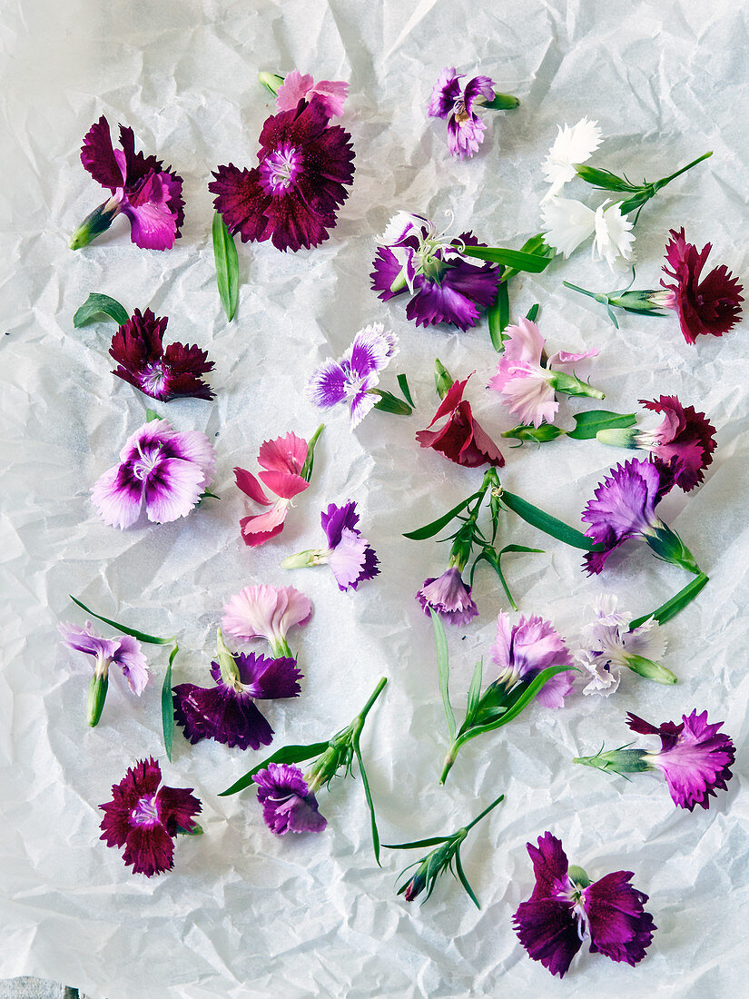 Various brightly coloured carnations