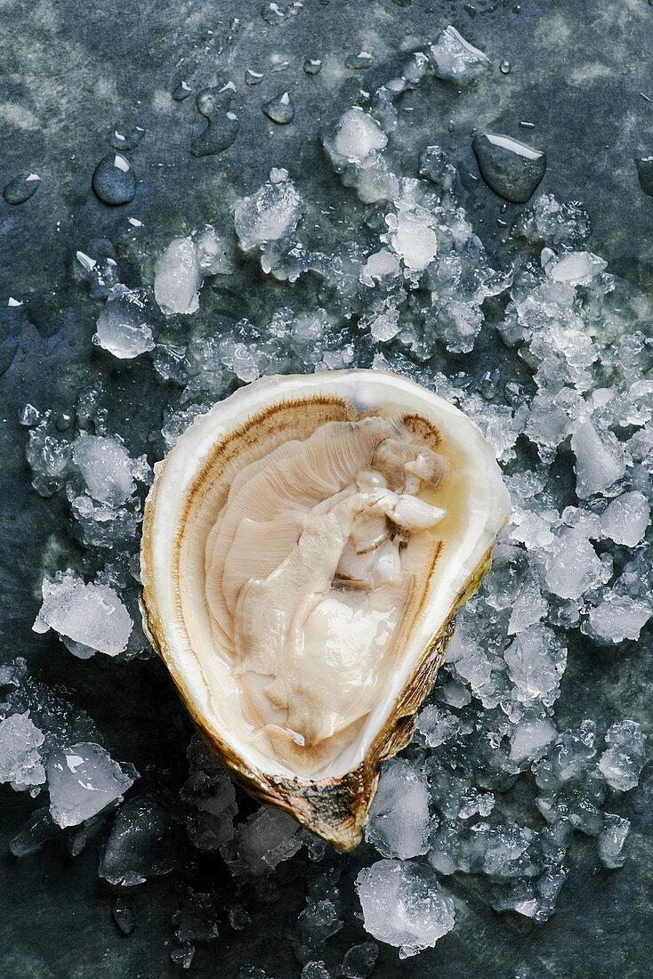 Frische Auster auf Eis