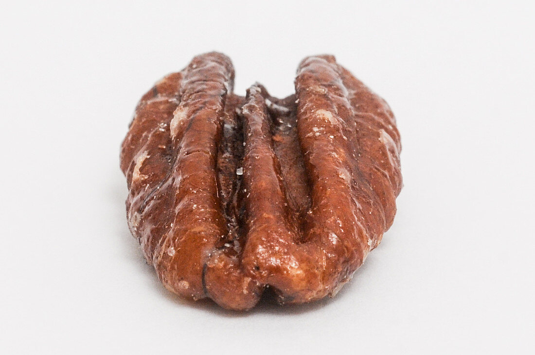 A pecan nut on a white background