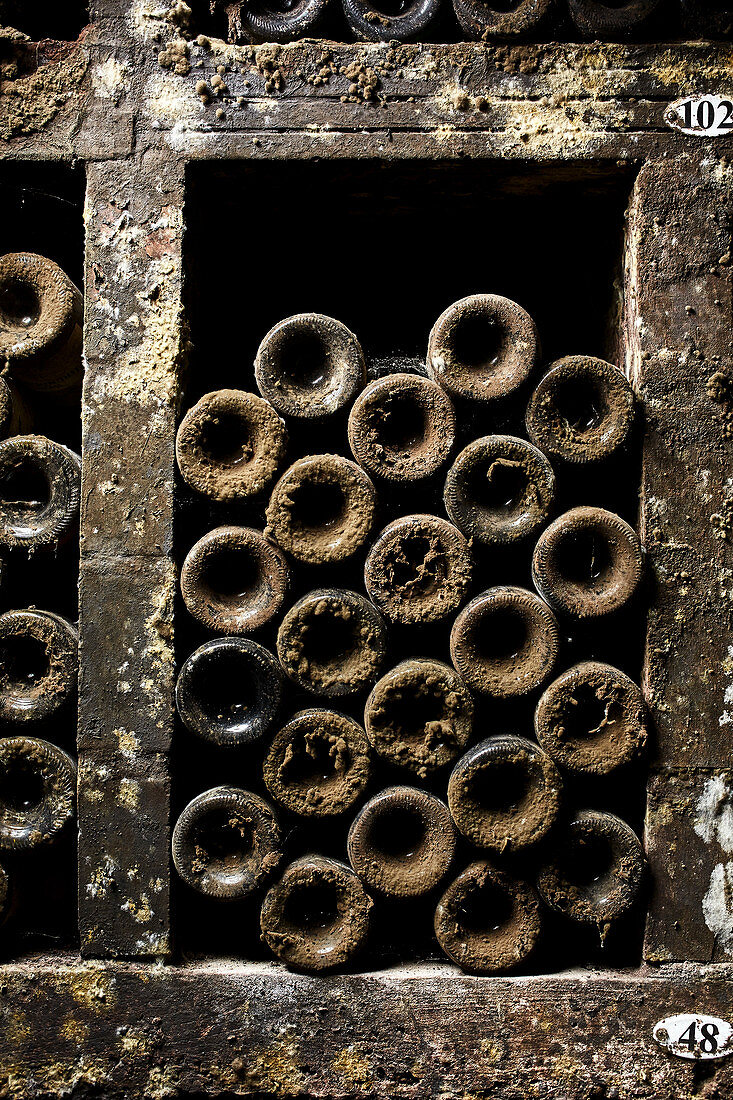 Old bottles of wine with cellar mould in a cellar