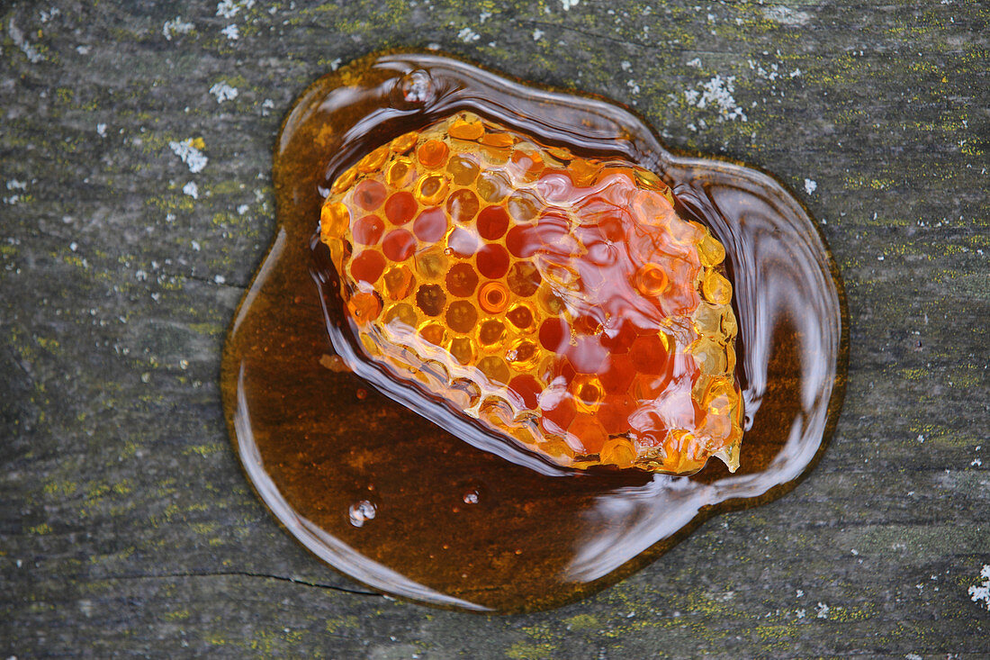 Honeycomb in liquid honey