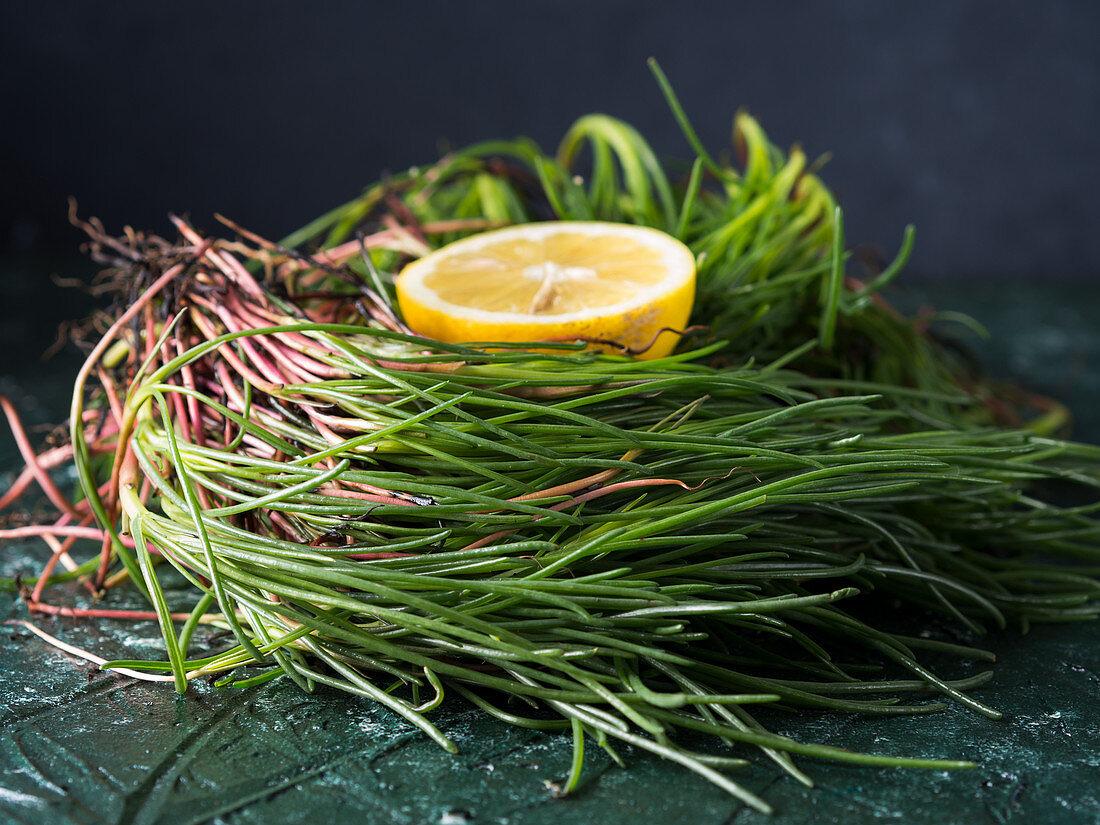 Italian agretti herb (barba di frate) on dark background with half lemon