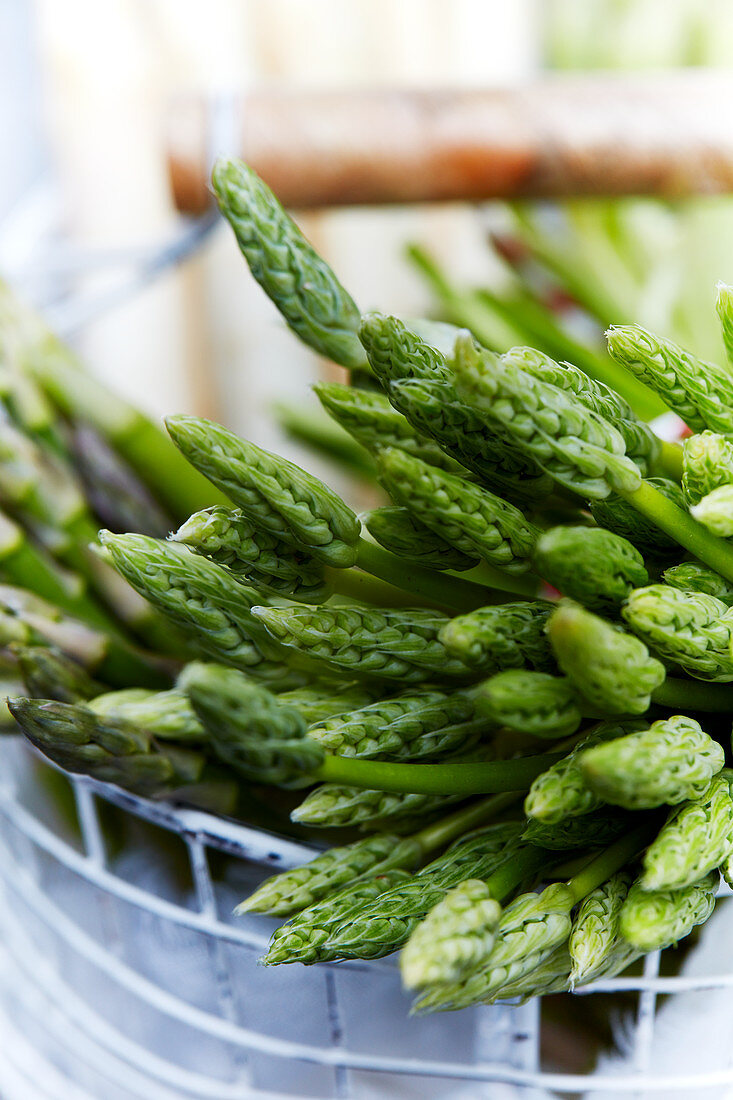 Hops asparagus in the wire basket