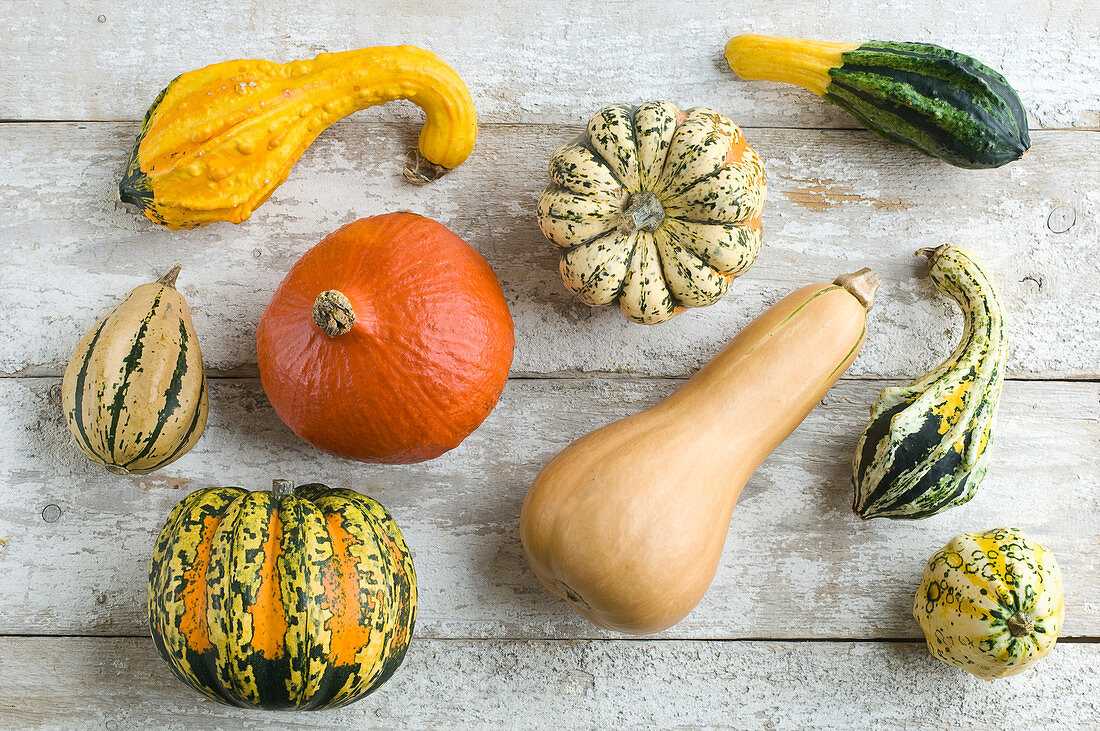 Various gourds and pumpkins on a rustic wooden background