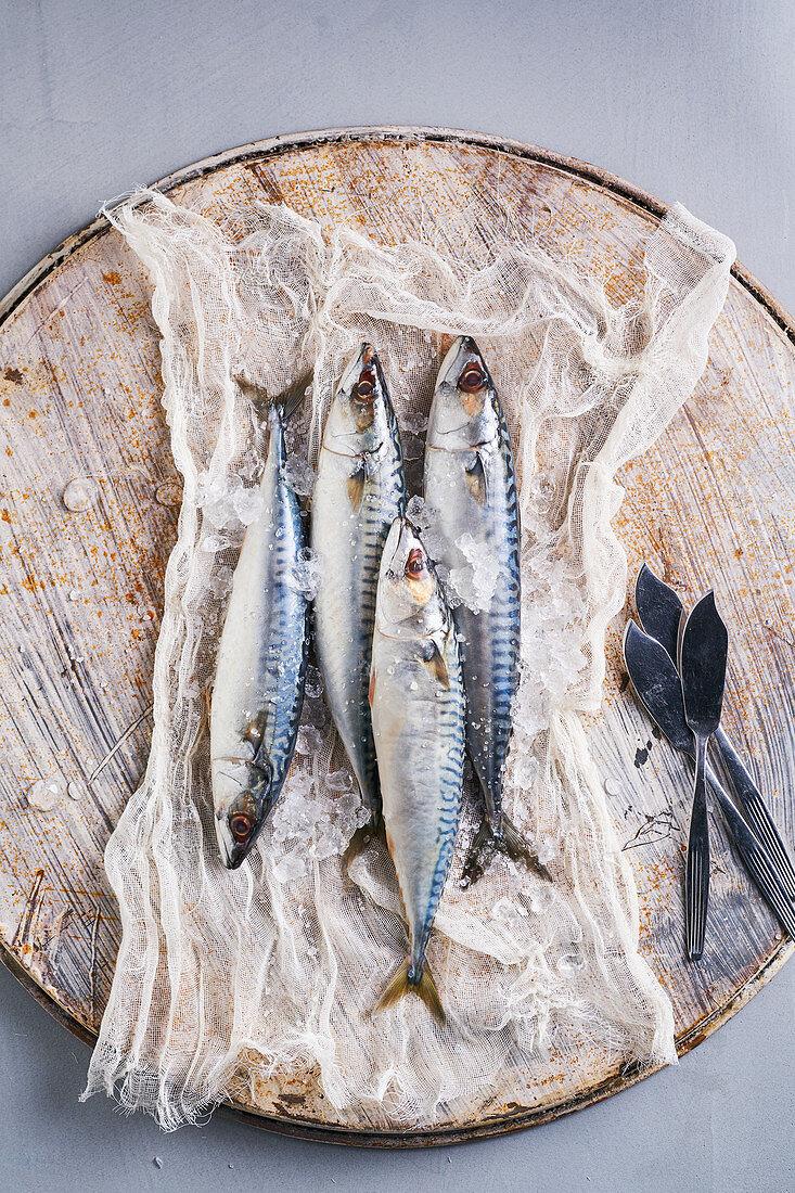Still life of fresh mackerel