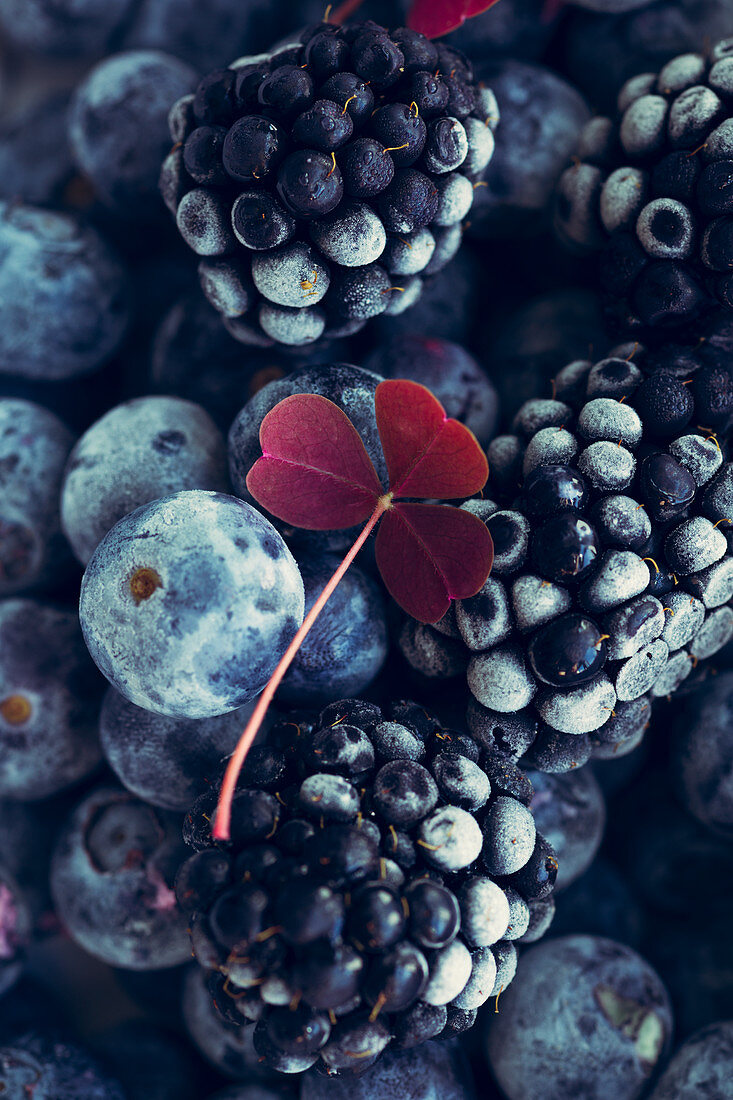 Frozen blackberries and blueberries (top view, close up)
