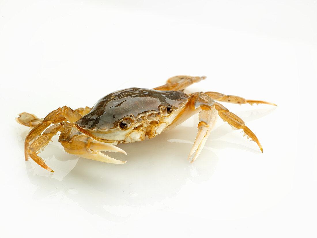 Raw crabs