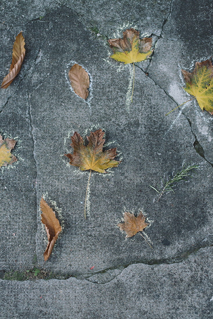 Autumn leaves with chalk on a concrete floor