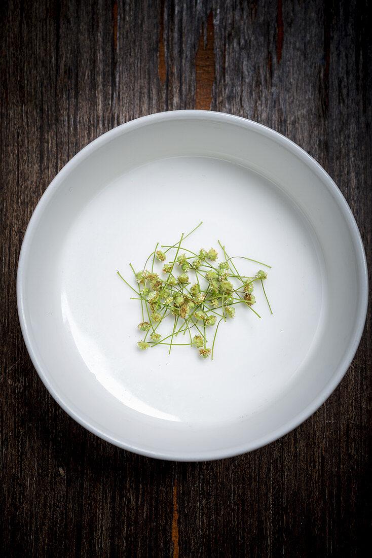 Aztec sweet herb flowers (Lippia dulcis) in a white bowl
