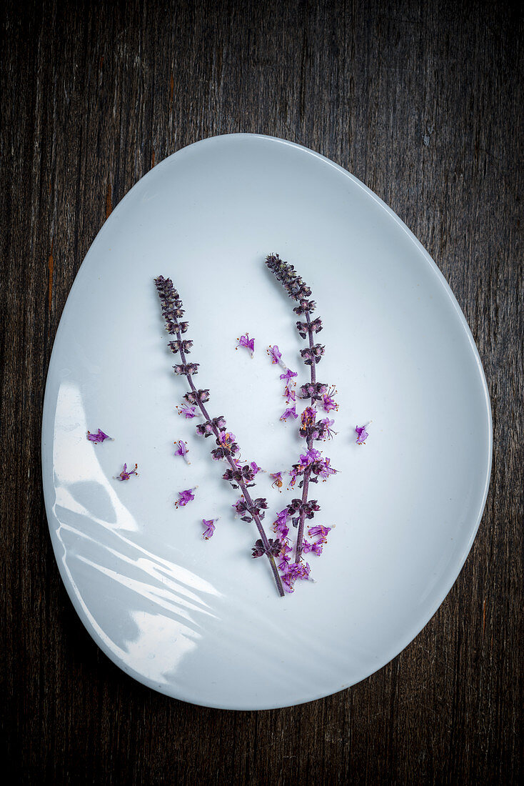 African basil lilac blossoms on a white dish