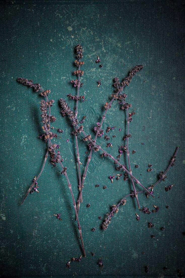Lila Blüten der afrikanischen Basilikumpflanze auf grünem Untergrund