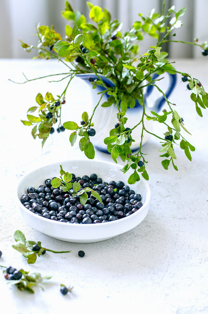 A bowl of blueberries and blueberry sprigs in a jug