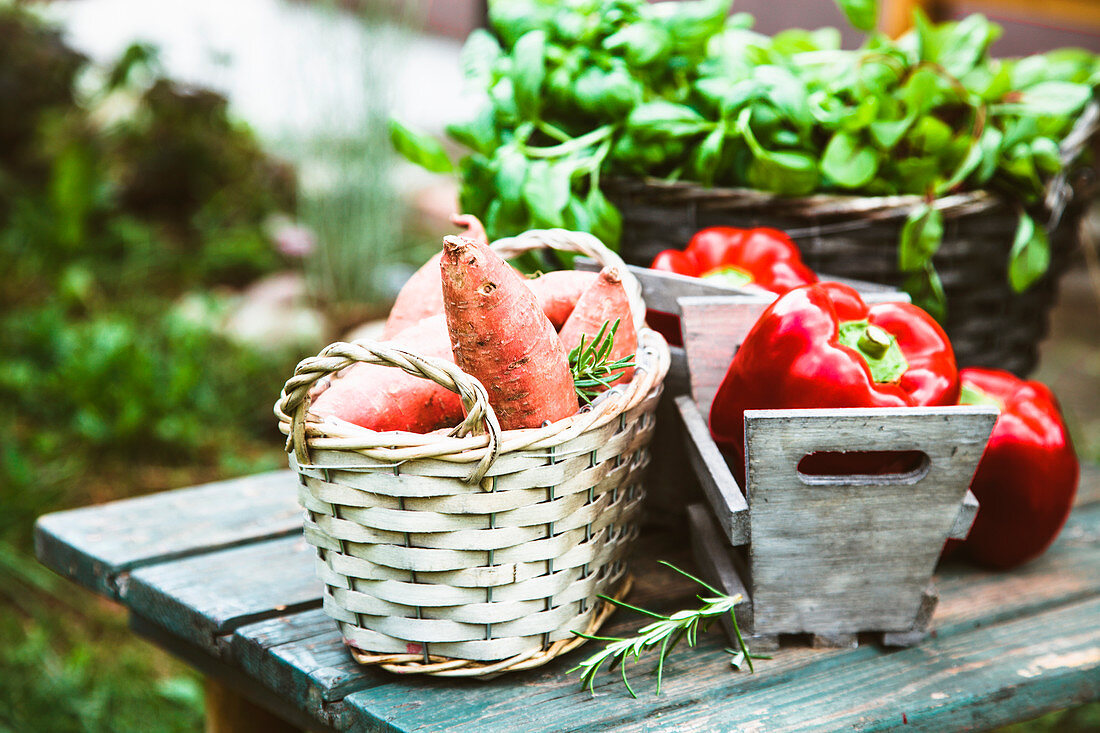 Fresh vegetables on wood in garden