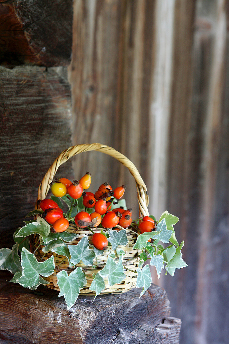 Basket of rose hips and ivy
