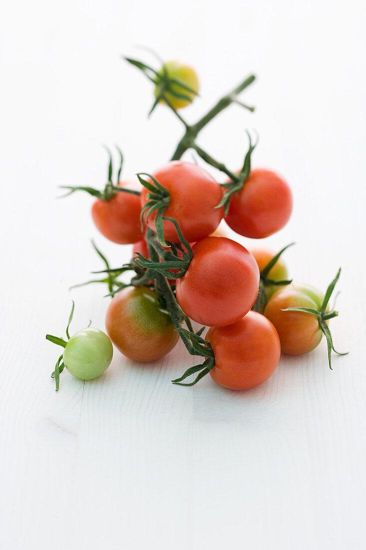 'Vesennij' (tomato variety)