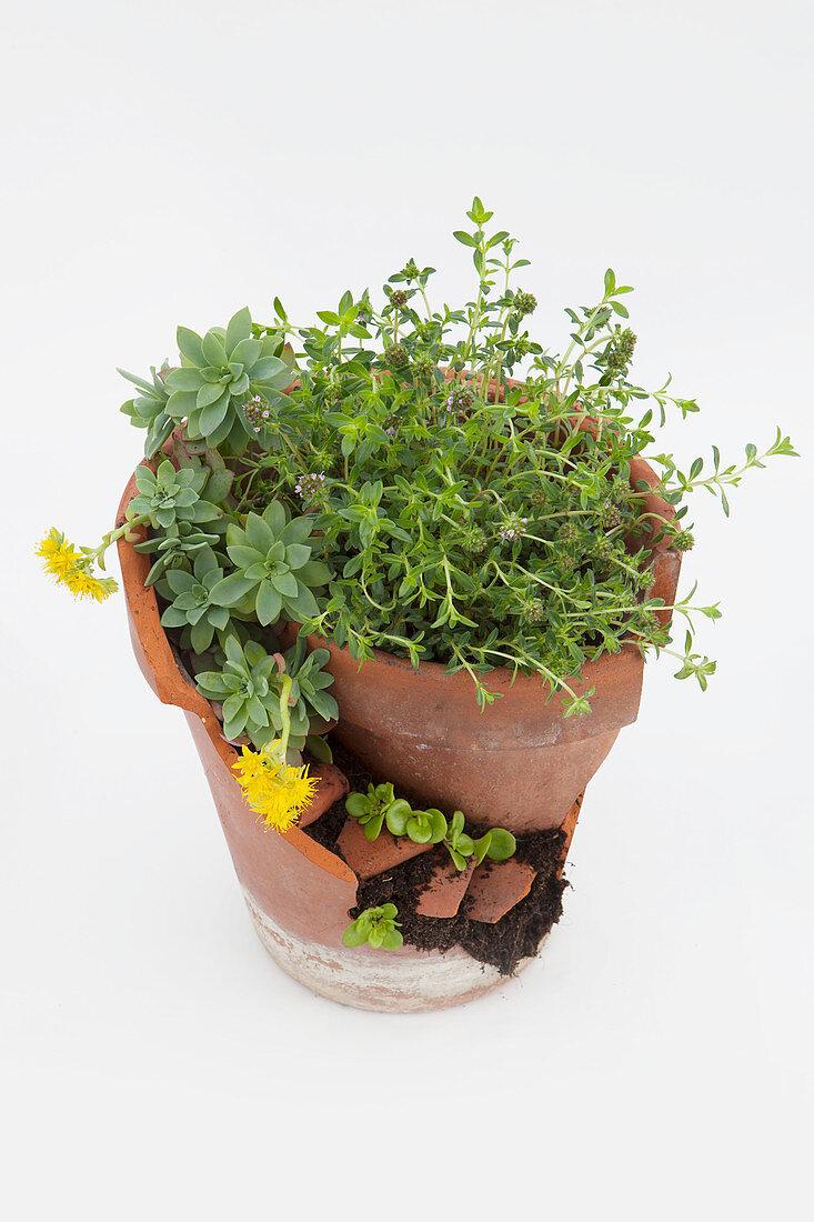 Dekorativer Mini-Terrassengarten