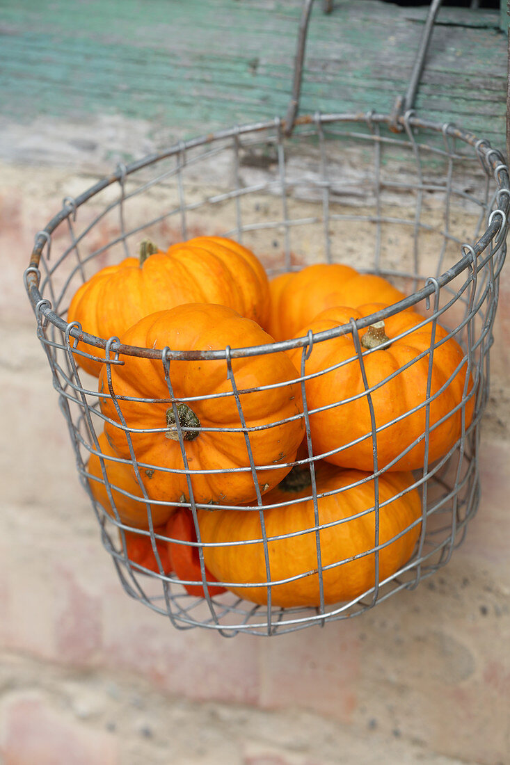 Small pumpkins in wire basket
