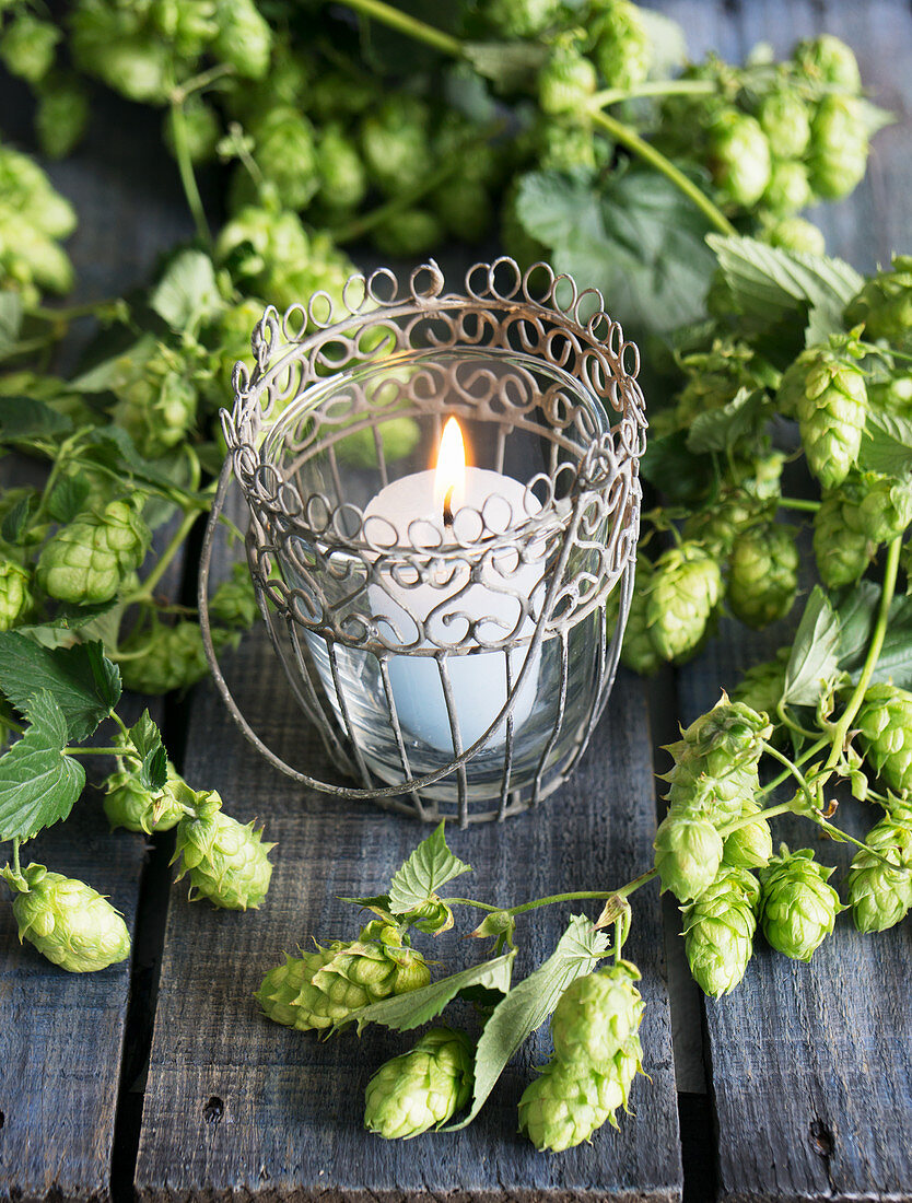 A tealight with a white candle and hops