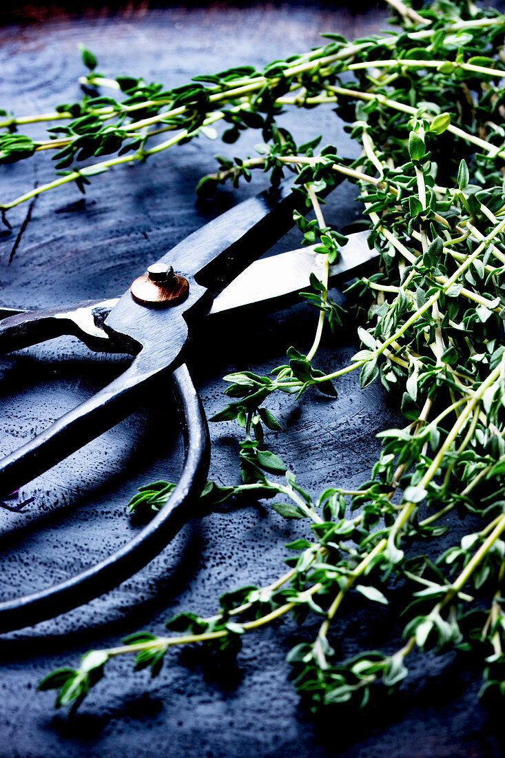 Fresh thyme sprigs on a wooden board with a pair of scissors