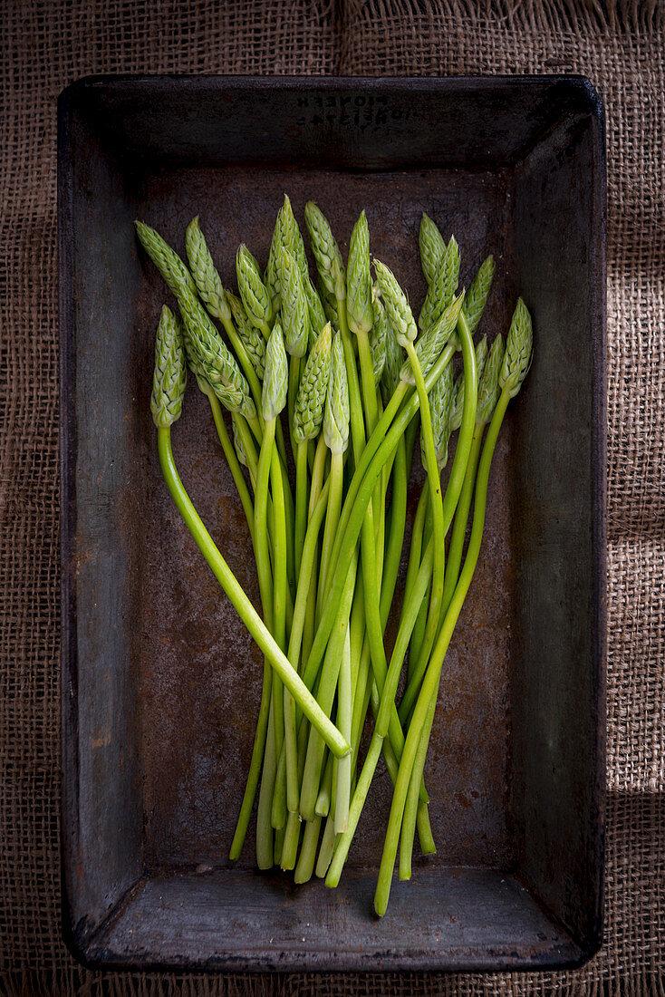 Wild Asparagus on a Metal Tray