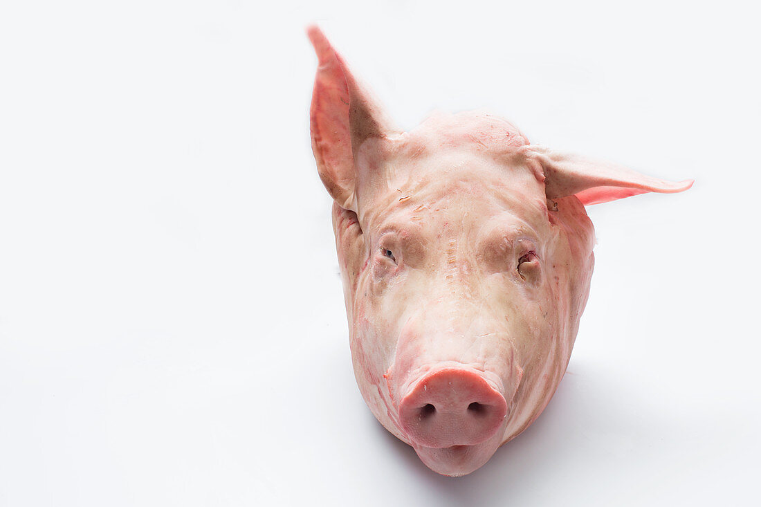 Whole head of the pig