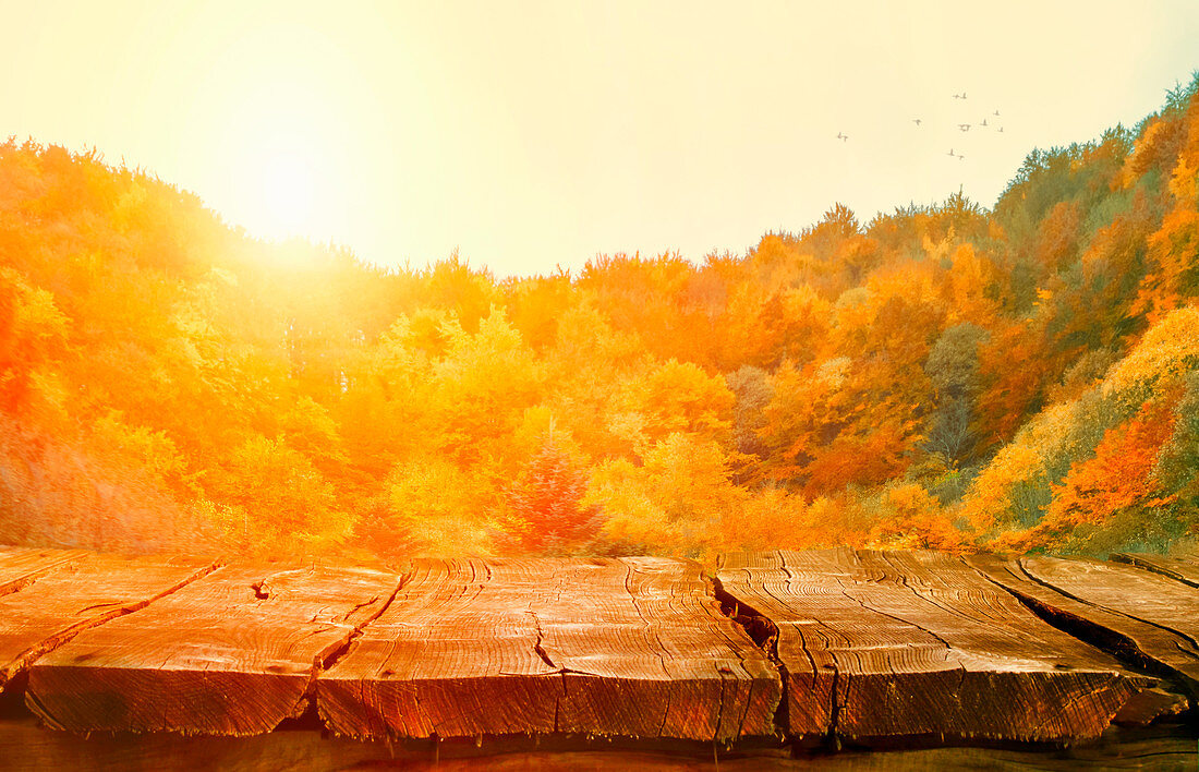 Autumn background nature: Tabletop with falling leaves