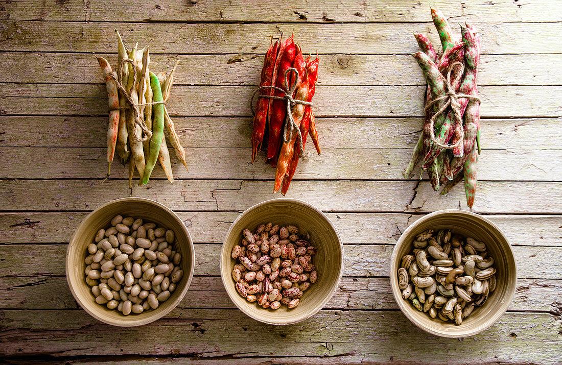Freshly harvested beans on table