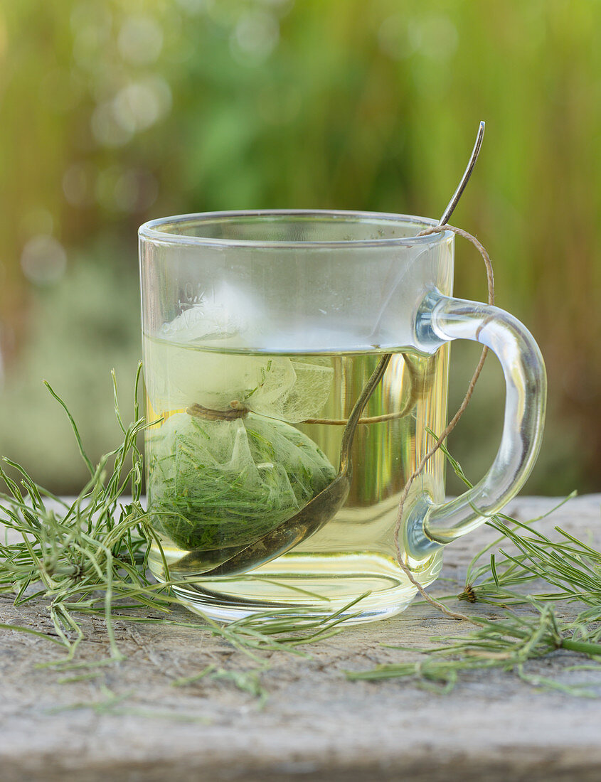 Horsetail tea in a glass cup