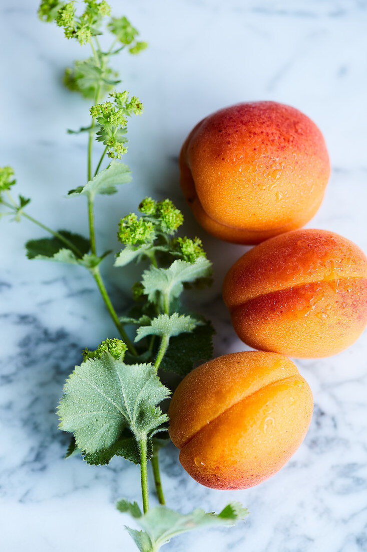 Three apricots and a sprig of lady's mantle