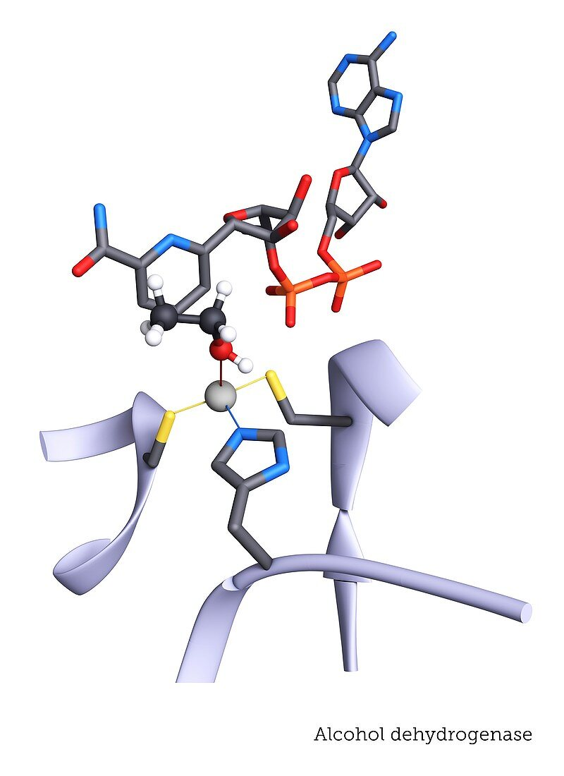 Active site of alcohol dehydrogenase enzyme