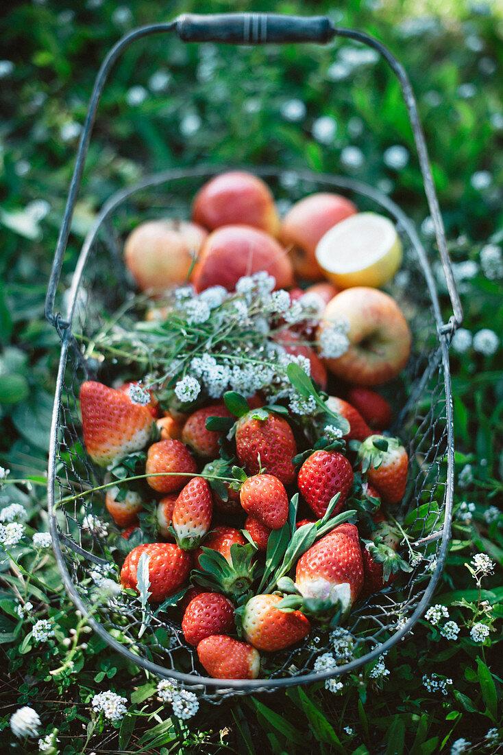 Frische Erdbeeren und Äpfel im Drahtkorb auf der Wiese