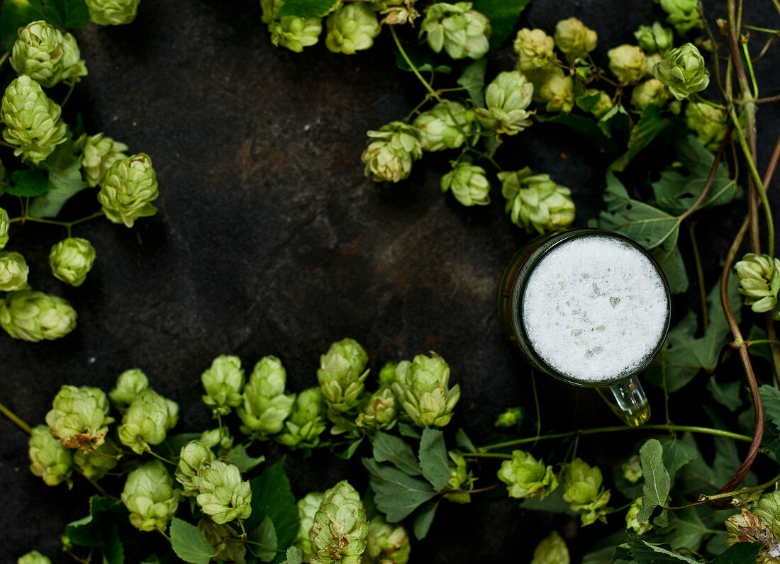 Beer and hops