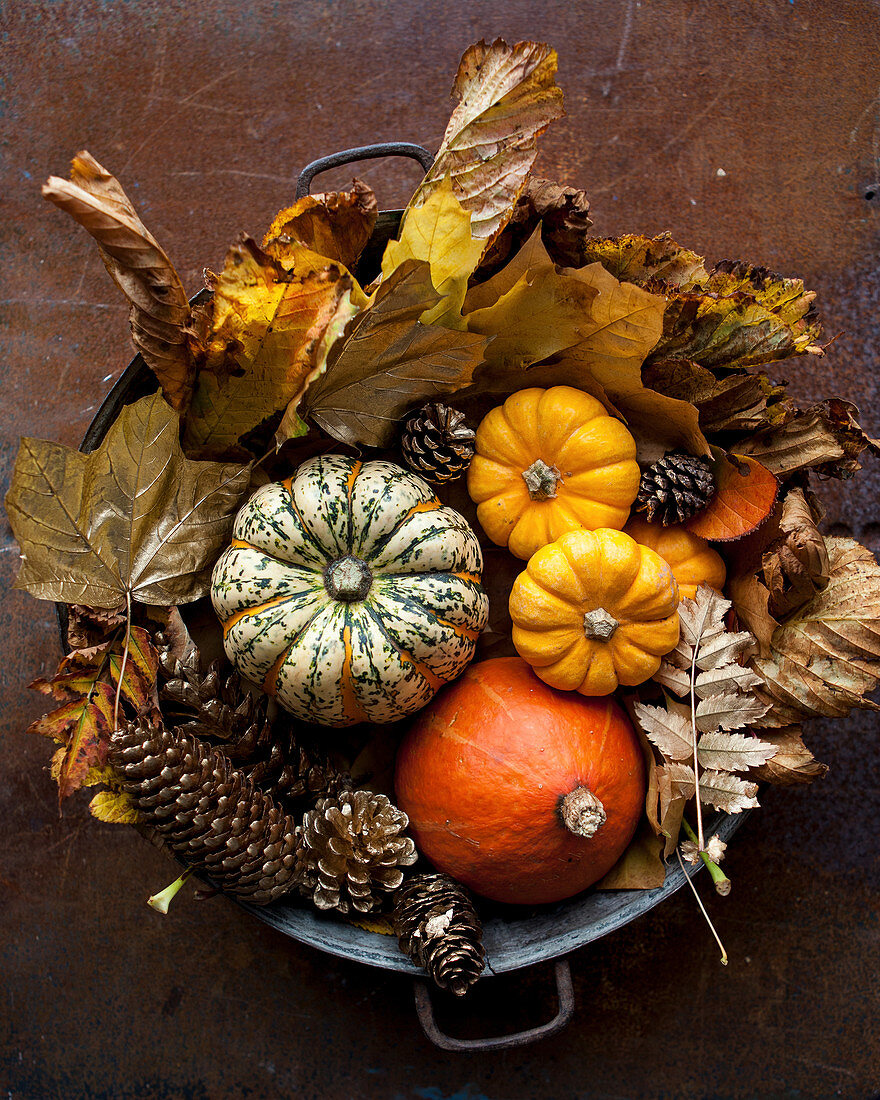 Pumpkins with autumnal leaves in a metal bucket