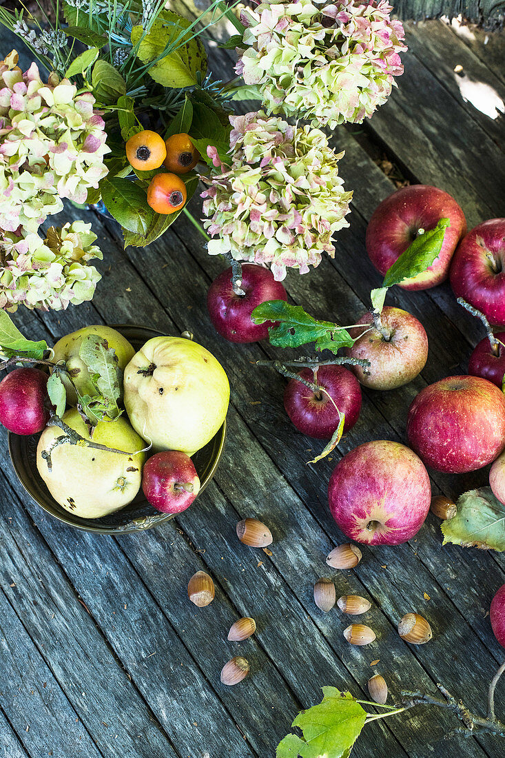 An autumnal still life with apples, quinces, nuts and flowers (top view)