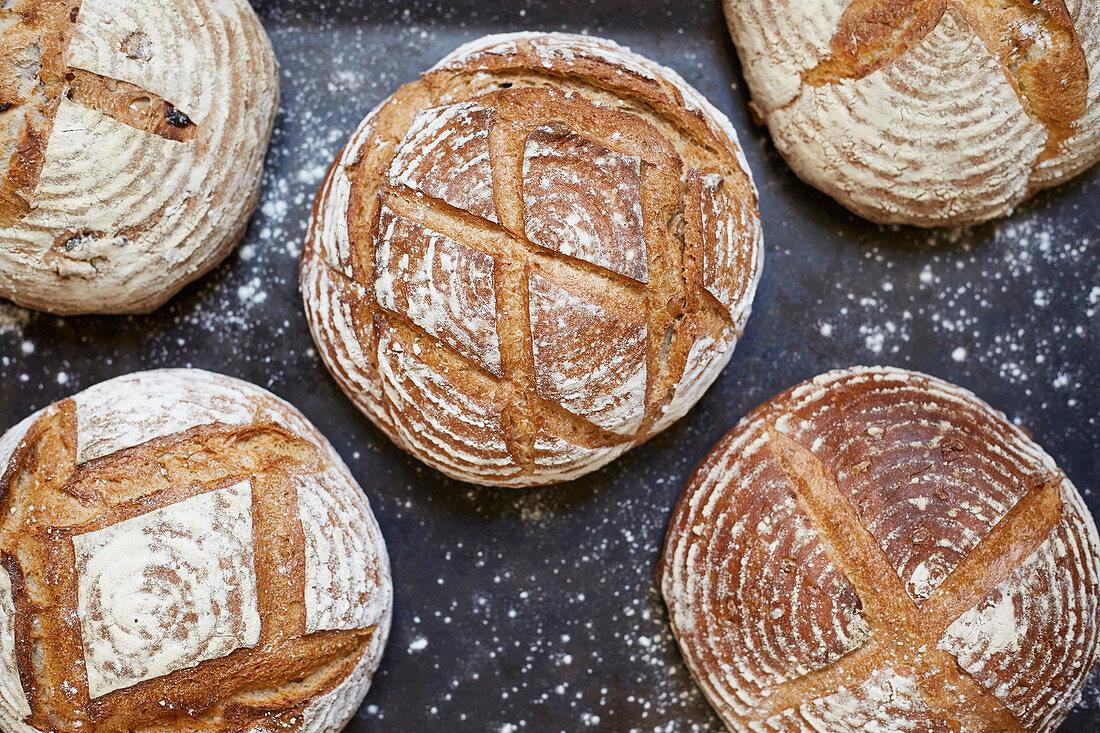 Artisan bread (filling the frame)