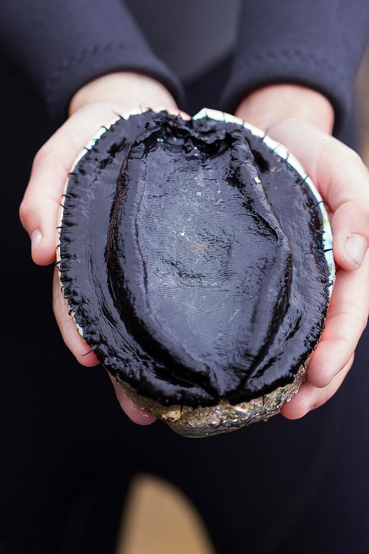 Girl Holding Freshly Gathered Paua