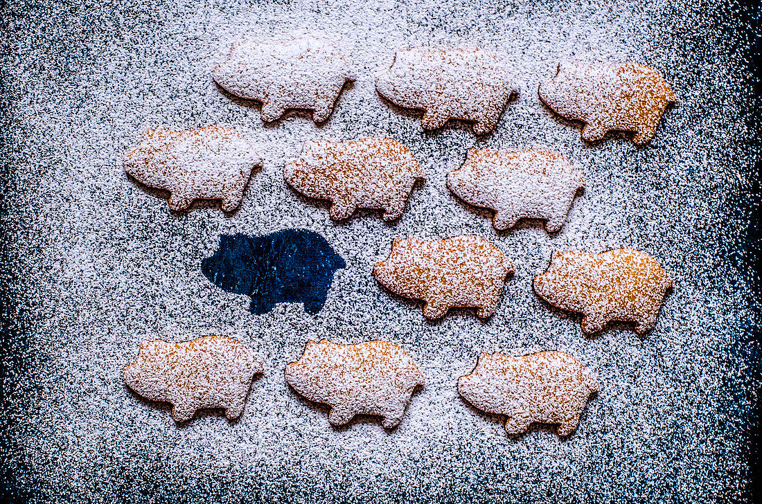 Gingerbread in the form of pigs laid out on a blue surface, sprinkled with powdered sugar (2019 Year of the pig)