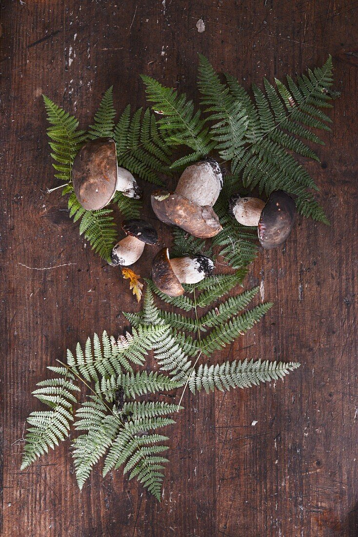 Fresh porcini mushrooms with fern leaves on a wooden background