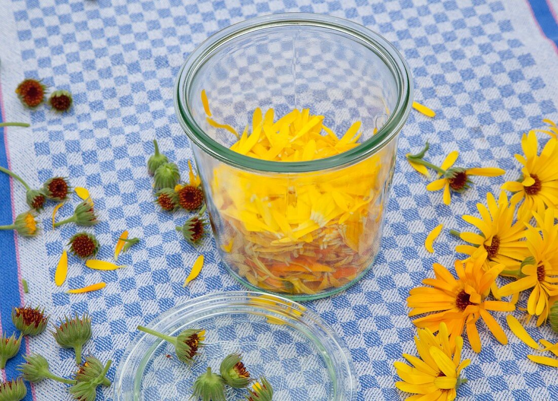 Making homemade marigold oil in a glass jar